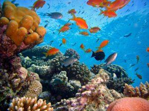 Leben im Korallenriff