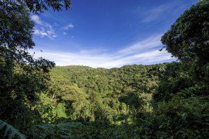 Durch Abholzung des tropischen Regenwaldes wird sowohl viel Kohlenstoffdioxid freigesetzt als auch eine wichtige Kohlenstoffsenke zerstört